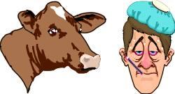 Hullun Lehmän Tauti Ihmisellä
